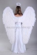 1870 крылья ангела