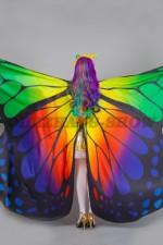 00101 Бабочка Лимонница. Вид сзади.